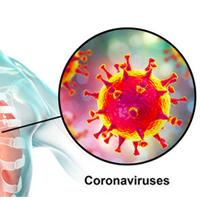 Corona of COVID-19