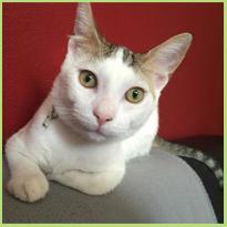 Onze Griekse huisdieren #blog6