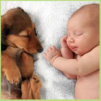 Voorbereiding huisdieren op gezinsuitbreiding