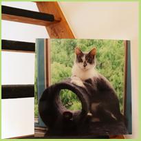 Je huisdier is ook een deel van je gezien, dus waarom geen fotowand van hem?