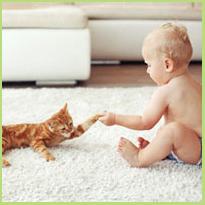 Kat en kind - Houd ze beiden happy