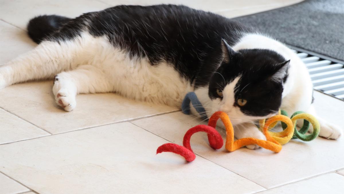 Een speelse kat is een gelukkige kat!