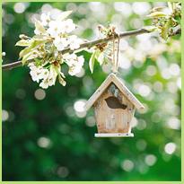 Hoe maak je een vogelhuisje voor in de tuin?