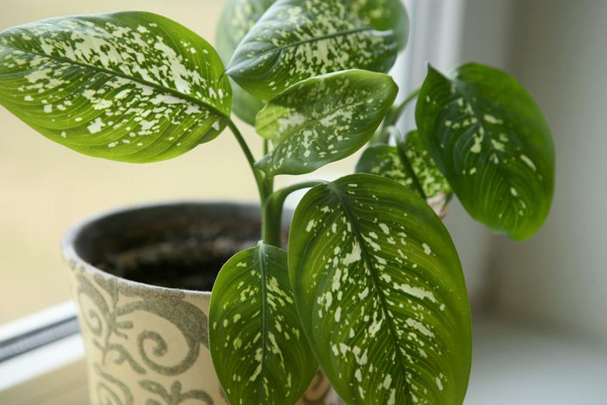 Giftige kamerplanten - Op welke planten moet je letten?