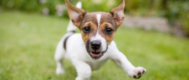 Ik wil graag een hondje #blog10