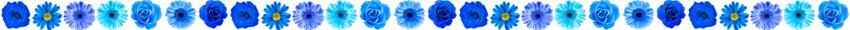 lijn blauwe bloemen
