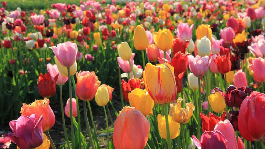 De lente in ons bol! Wat is er te doen?
