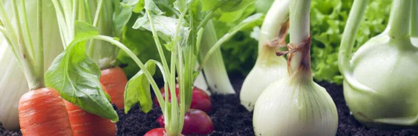 Vruchtbaarheid en voeding