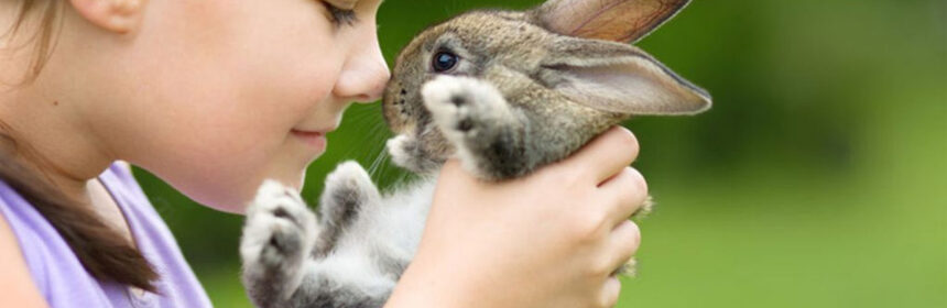 Hoe verzorg je een konijn?