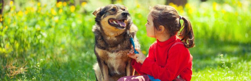 Huisdierenregels top 10