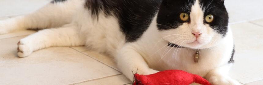 Hoe houd je je kat gelukkig? Door in ieder geval veel met hem te spelen!