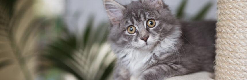 Katten benodigdheden
