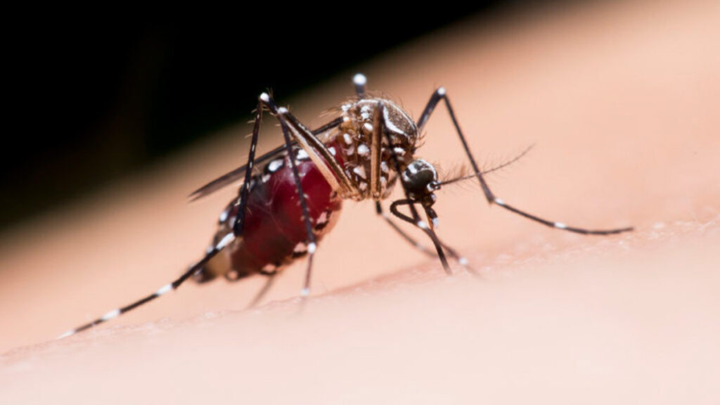 Muggen en muggenbulten: De beste tips & tricks