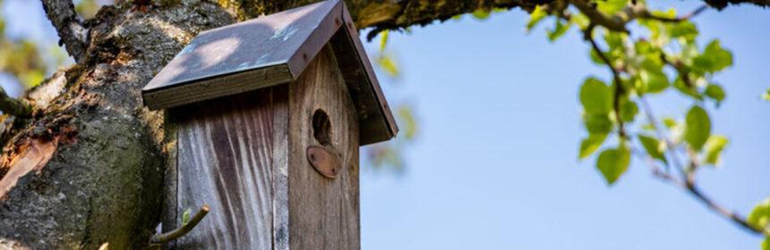 Maak van je tuin een vogelvriendelijke tuin