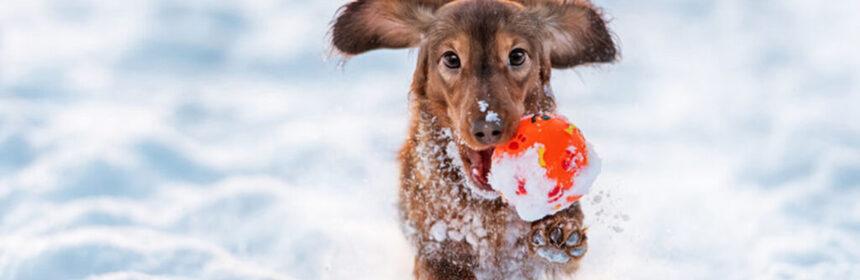 De risico's van de winter. Waar moet je op letten?