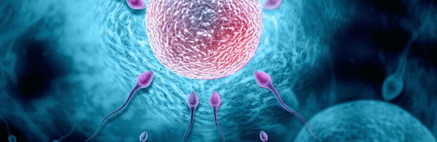 Wanneer kan de Billings ovulatiemethode handig zijn?